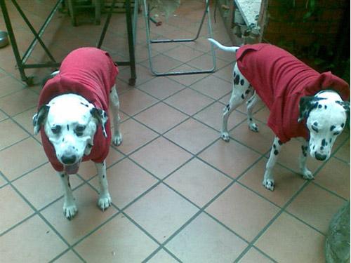 Ingrosso Felpe per cani