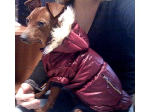 Ingrosso Abbigliamento per Cani