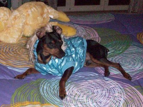 Ingrosso Cappottini per cani